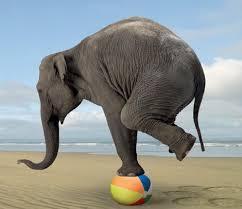 Balance-elefant